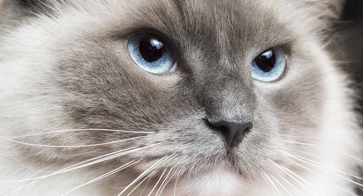 Finest Kitten Food – Reviews & Buying Guide Outline