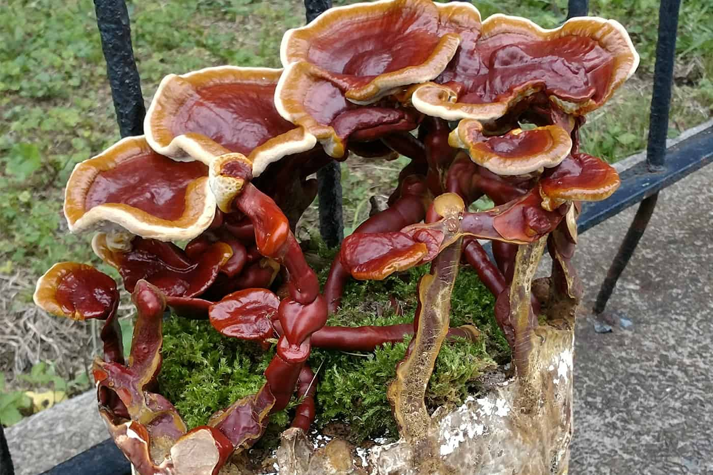 MUSHROOM: Discover Its Authentic Power, And Most Are Low Quality
